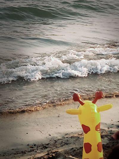 nostalgia da migrante Migrating Migration Giraffa Beach Water Sea Yellow Outdoors Day Beauty In Nature No People