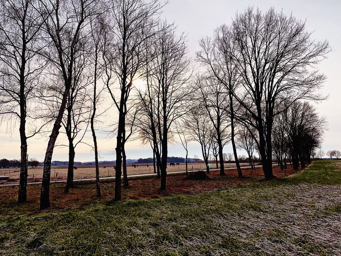 Winter Bennemühlen Wedemark Sky Nature Tranquility Growth Land Landscape Scenics - Nature Outdoors Grass Field