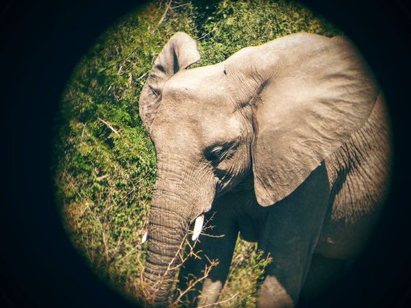 One Animal Close-up Vignette Person Domestic Animals Mammal Personal Perspective Outdoors Day Human Finger Extreme Close Up elephant