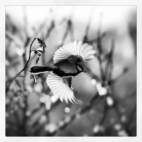 Nature Bird Photography Bird Black & White