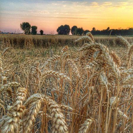 Landscape Field WheaterPro: Your Perfect Wheater Shot Sky Sunset