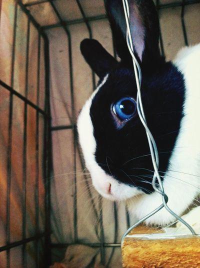 Rabbit ❤️ My Pet Look Me In The Eyes