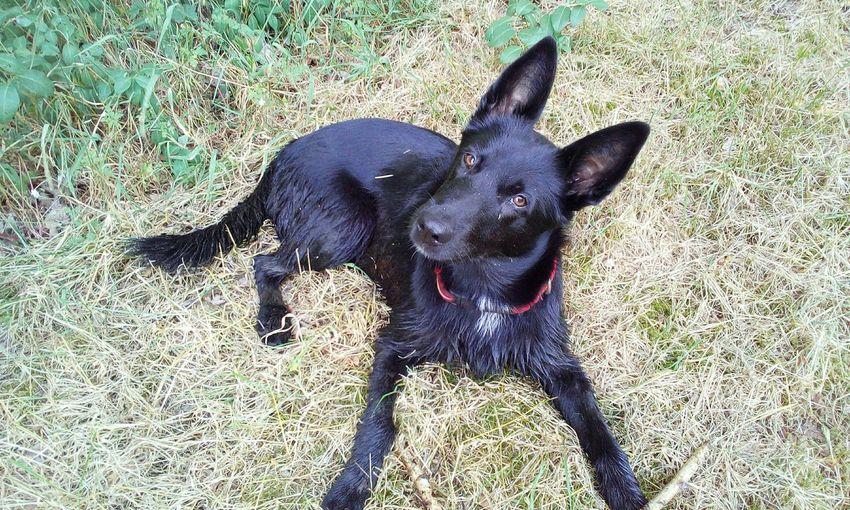 Belgischer Schäferhund Pets Dog Shadow Sunlight Grass
