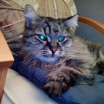 Cat Cats 2014 Instacats catsagram catsofinstagram we_love_cats caturday кот котэ