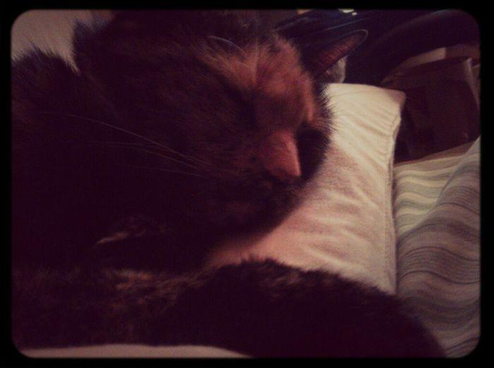 Salem Kitty!  Cat