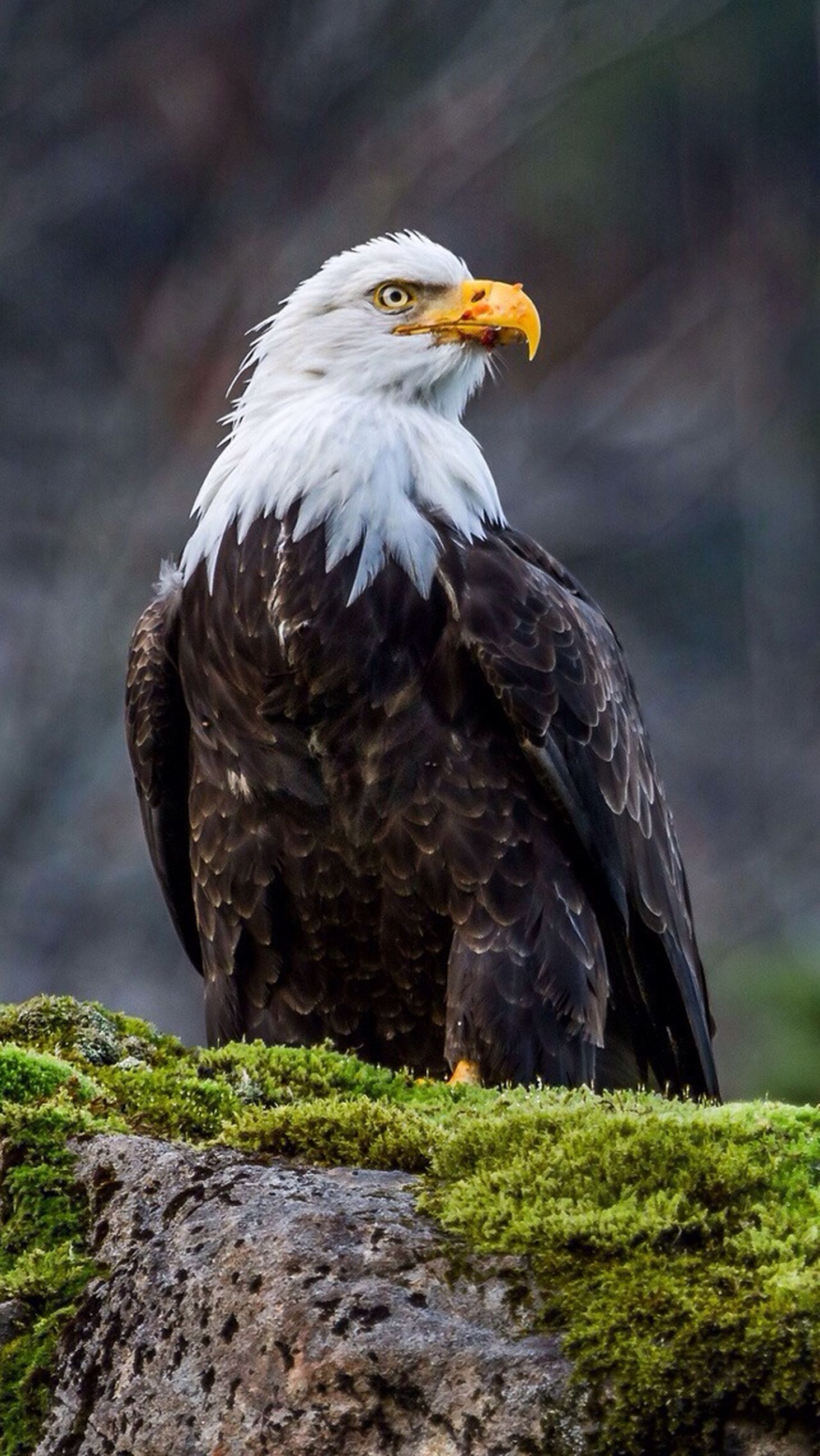 bird, animal themes, animals in the wild, one animal, wildlife, focus on foreground, perching, beak, close-up, rock - object, nature, full length, side view, outdoors, day, no people, beauty in nature, bird of prey, looking away, zoology