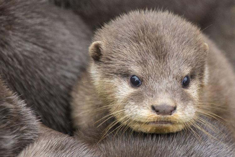 Denmark Otter Ree Park Wintertime Animal Danmark Day Odder Young Animal