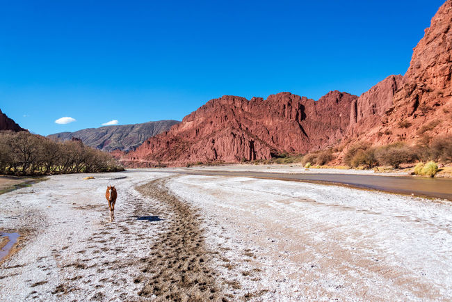 A young colt in a valley surrounded by beautiful red hills in Tupiza, Bolivia Arid Arid Climate Beauty In Nature Bolivia Cactus Canyon Colt Countryside Desert Desert Formation Formations Horse Landscape Red Rock Rocks Rugged Rural Sky South America Tourism Travel Travel Destinations TUPIZA