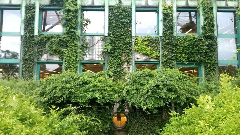 Symetry Vine Climbers And Grasses Climbing Plant Nature Nature Vs City Nature Vs Humanity Nature Vs Built Nature Vs Building Warsaw Library Windows Rambler Creeper Creeper Plant Harmony Symetrical Symetricphoto Symetrical Building Symetria Green Garden
