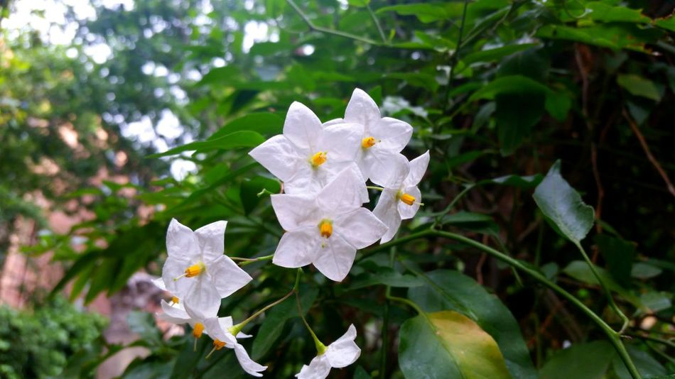 Flower White Color Petal Plant Day Outdoors Nature Leaf Fragility Growth No People Flower Head Beauty In Nature Close-up Freshness Water