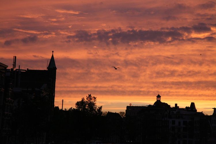Sunset Architecture Building Exterior Built Structure Silhouette Sky Bird Cloud - Sky Flying Animal Themes Orange Color Animals In The Wild Nature Outdoors No People One Animal Animal Wildlife City Beauty In Nature Day Amsterdam Breathing Space