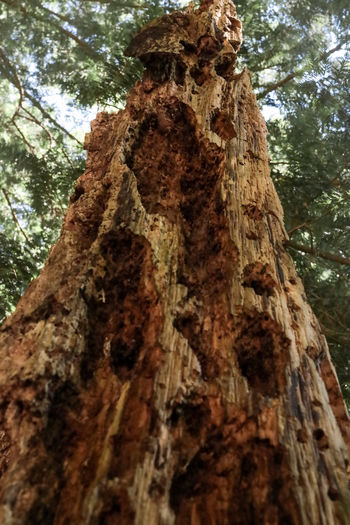 Low angle view of tree trunk in forest