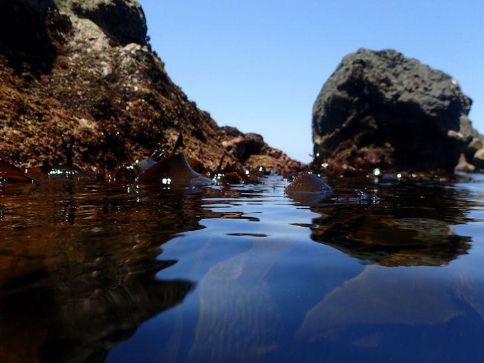 神島の海 Sea Sea Weed  Summer Kamishima Island