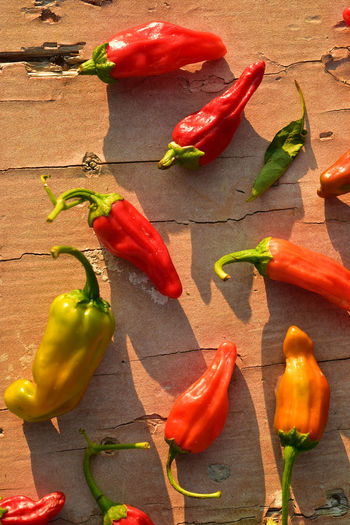 Homegrown red, orange, and green small hot chili peppers spicy vegetable ingredient for cooking