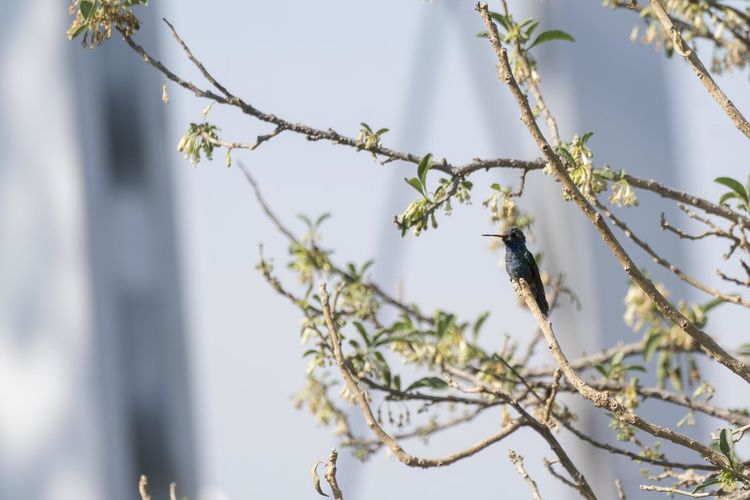 Low angle view of flowering plants and hummingbird on tree