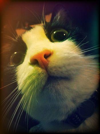 Meow. Cat EyeEm Best Shots Animals Cute Pets