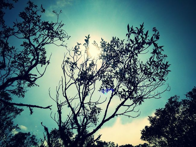 Trees Observation Brazil Ibitipoca Nature_collection Travel Bluesky Photography Colors Belezanatural
