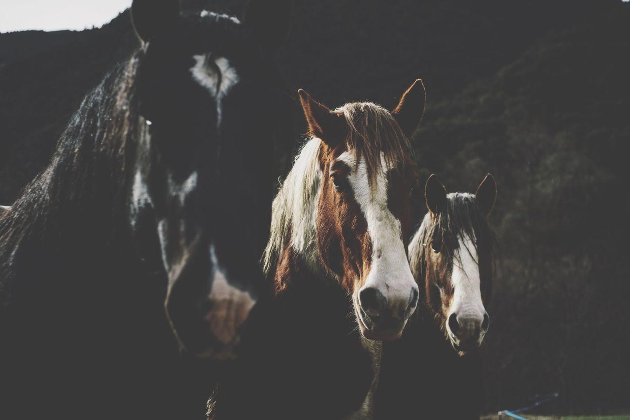 Close-up portrait of three horses