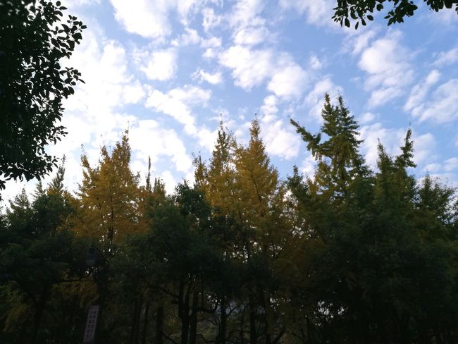 Fall in southern China Tree Sky Nature Cloud - Sky Outdoors No People Autumn Beauty In Nature