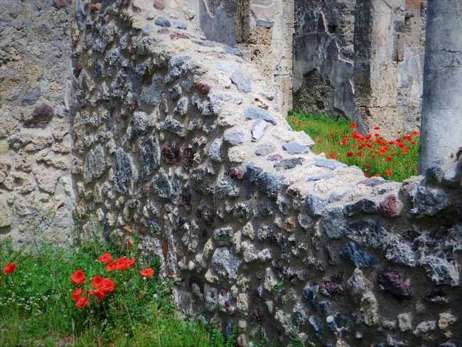 Architecture Beauty In Nature Built Structure Close-up Day Flower Flower Head Fragility Growth Nature No People Outdoors Plant Pompei Scavi Pompeii Details Pompeii Ruins Red Tree Trunk