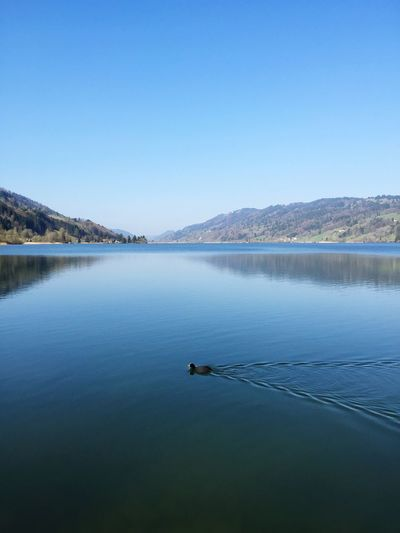 Fleißige Ente im See Lake View