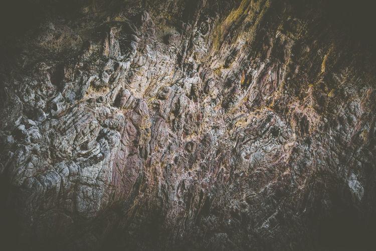 Full frame shot of rock in forest