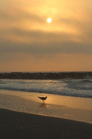 Early Morning Sun Ocean Ocean View Beauty In Nature Beachphotography Life Is A Beach Seagull Silhouette Sky EyeEm Nature Lover Sunlight Morning Light Tranquility Waves Waves And Rocks Beach Outdoors Gold Colored Ocean City, NJ