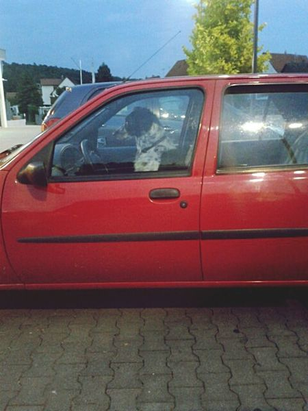 Stand Out From The Crowd Dog In A Car