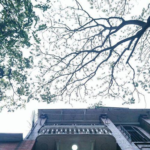 爪. Tree Canton