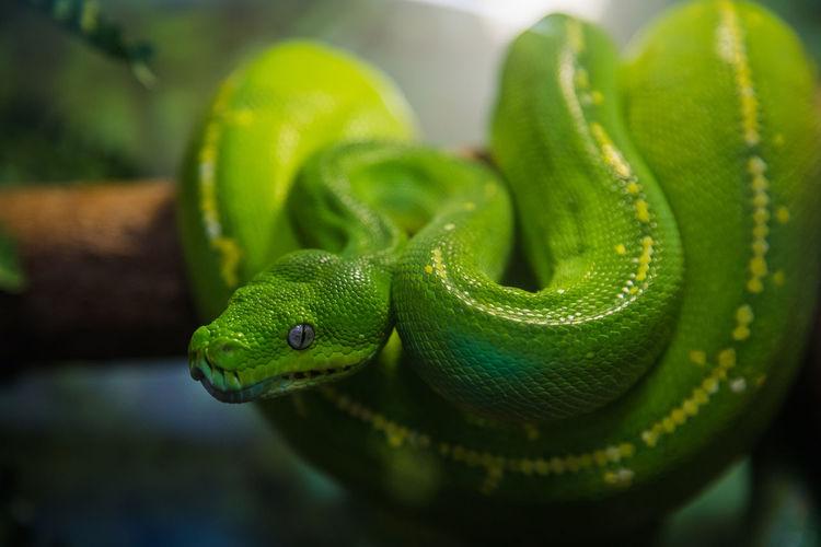 Reptile Animal