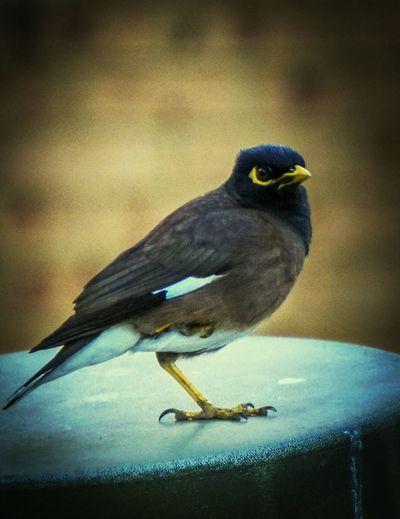 Birds Nature Wildlife A6000