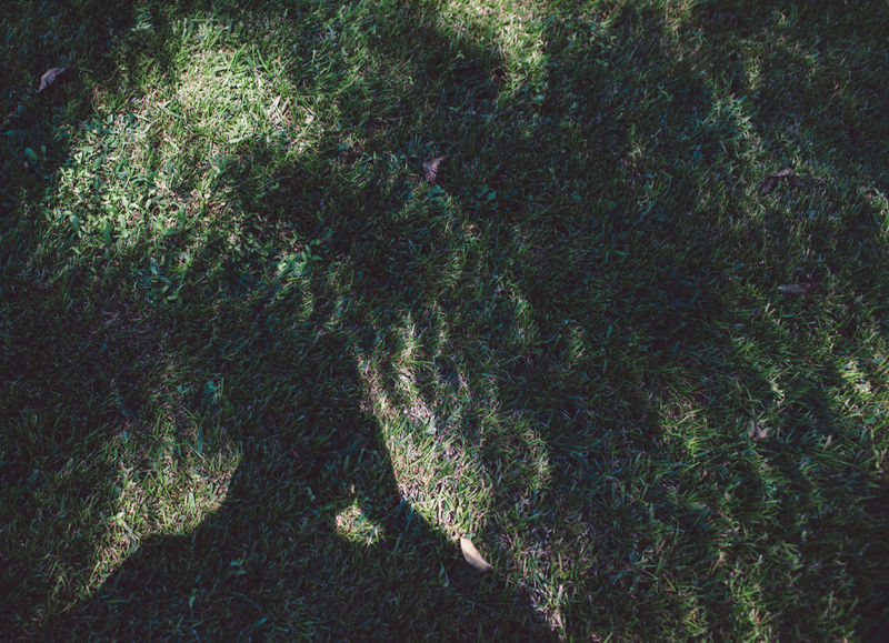 USA USAtrip United States Backgrounds Cerulean Close-up Day Eclipse Eclipse 2017 Eclipse Shadows Full Frame Growth Nature No People Outdoors Satellite View Shadow Solar Eclipse Textured  Tree