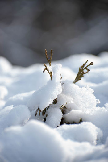 Close-up of insect on snow