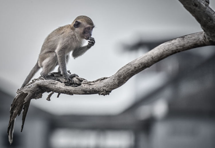 Low angle view of monkey on branch