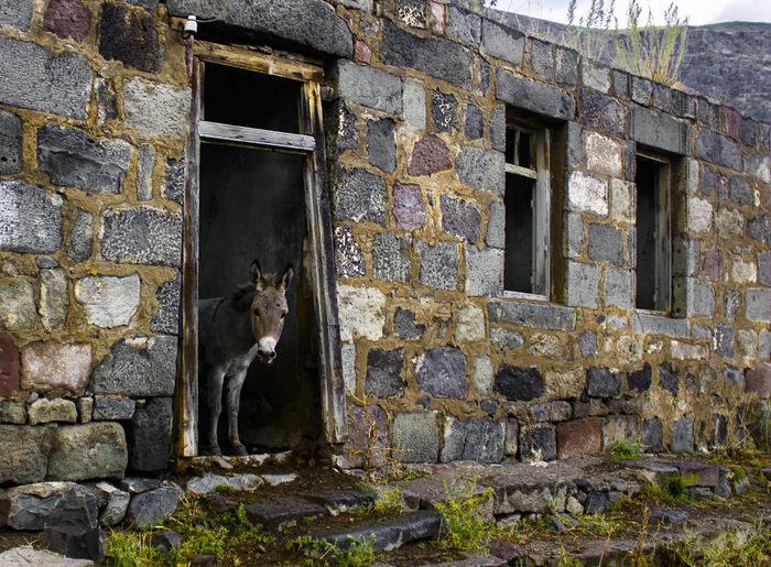 Donkey Hostel Animal Themes Architecture Brick Wall Building Exterior Built Structure Day Dog Domestic Animals Donkey Donkeys Doorway Guests Hanging Out Homesweethome Hospitality Hostel Hostman Mammal Nature No People One Animal Outdoors Pets Ruins Window Live For The Story Out Of The Box