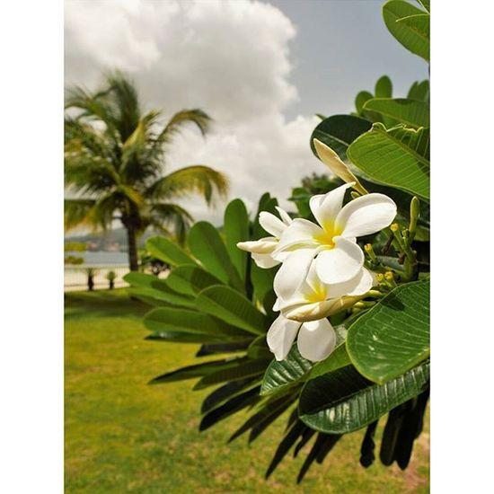 paradise Grenada GrandAnseBeach Paradise Flower Palms Serenity Islandlife Nikon