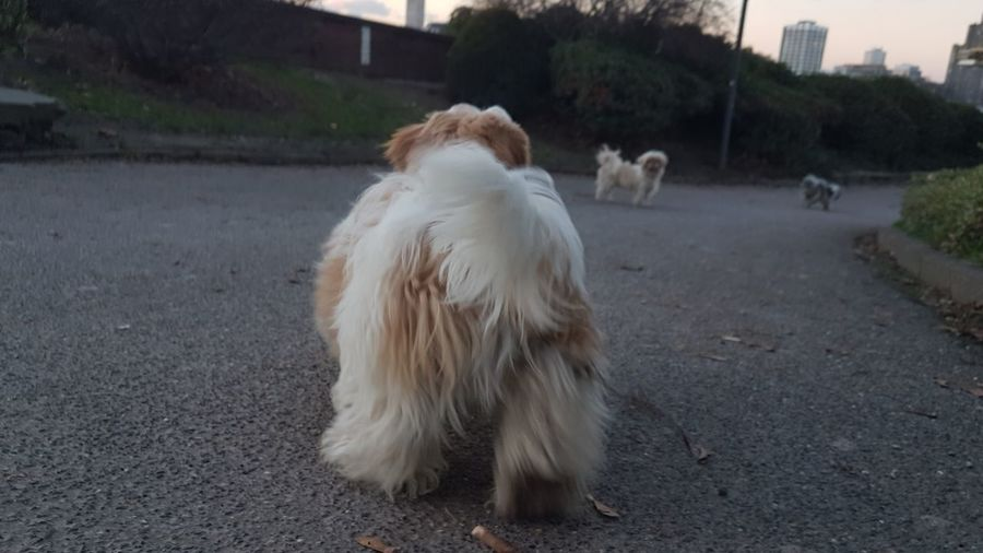 View of a dog on road in city