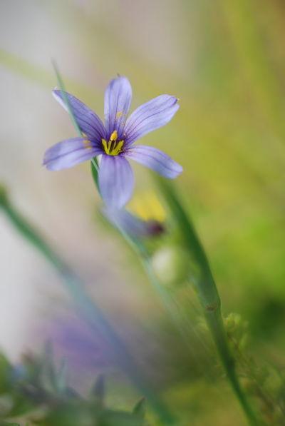 瑠璃庭石菖の花 Flower Nature Beauty In Nature Close-up Macro Macrophotography Macro Beauty Freshness EyeEm Nature Lover Flowerlovers Flower Photography Flower Collection EyeEmNewHere