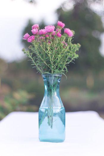 Flower Vase Table Plant Softness Nature Beauty In Nature Garten Blumen Dekoration Focus Object