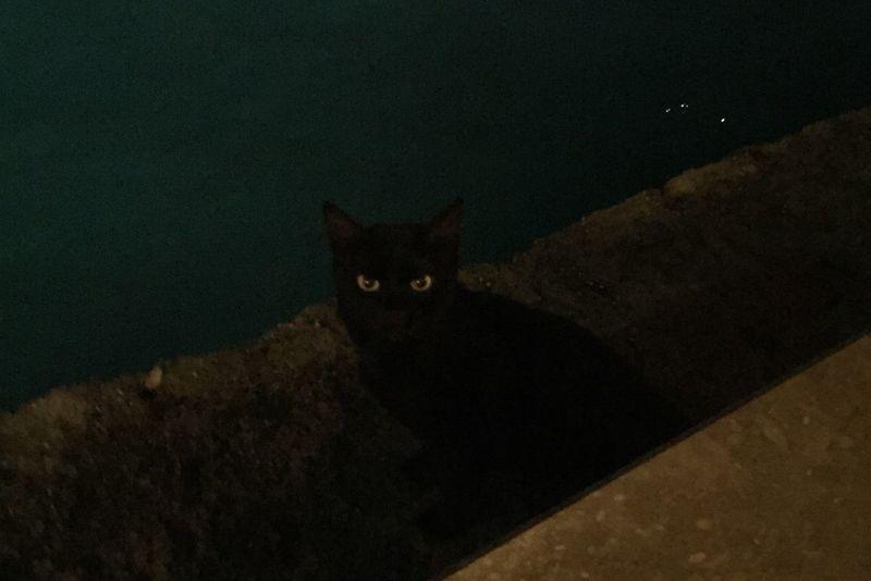 Cat Black Picofthenight Photoofthenight Eyes Saturday