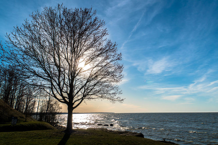 Bare Tree Beach Beauty In Nature Cloud - Sky Day Horizon Horizon Over Water Land Nature No People Non-urban Scene Outdoors Plant Scenics - Nature Sea Sky Tranquil Scene Tranquility Tree Water