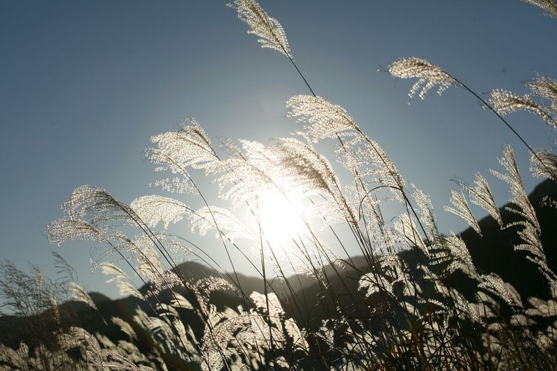 Low angle view of plants against bright sun