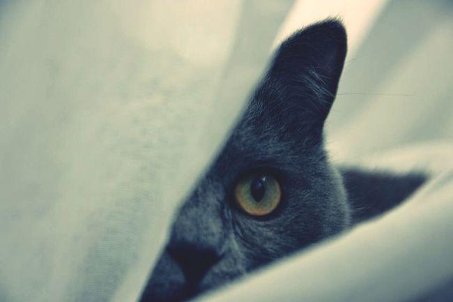 My cat ! Tellement caractériel