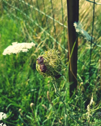 Nature Flower Growth Green Color No People Day Focus On Foreground Plant insecte Close-up Beauty In Nature Outdoors Fragility Flower Head Freshness