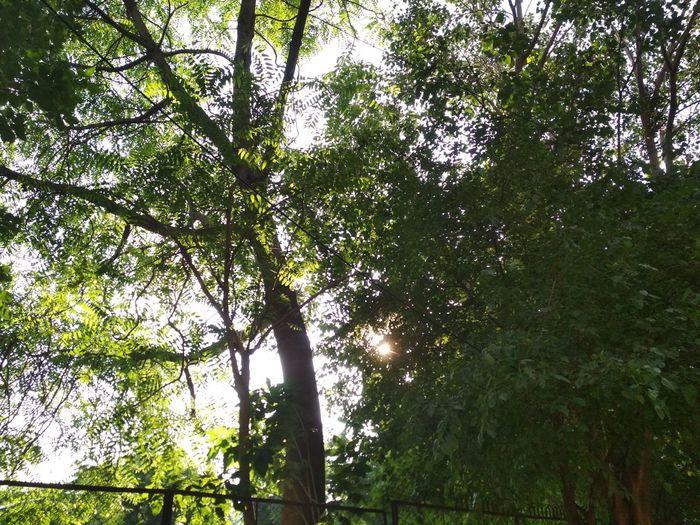 shade of trees