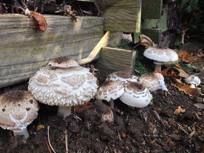 Lesum Bremen Mushrooms Herbst Autumn