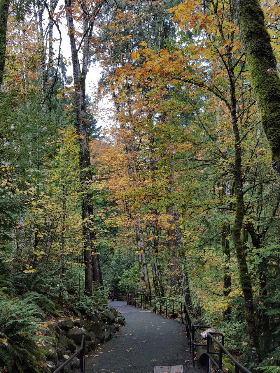 nature, autumn, tree, the way forward, tranquility, leaf, beauty in nature, scenics, tranquil scene, change, forest, day, no people, growth, outdoors, landscape