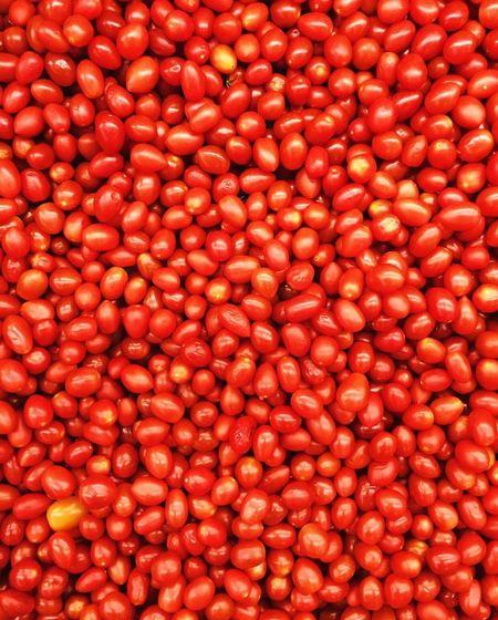 red Cherrytomoatoes