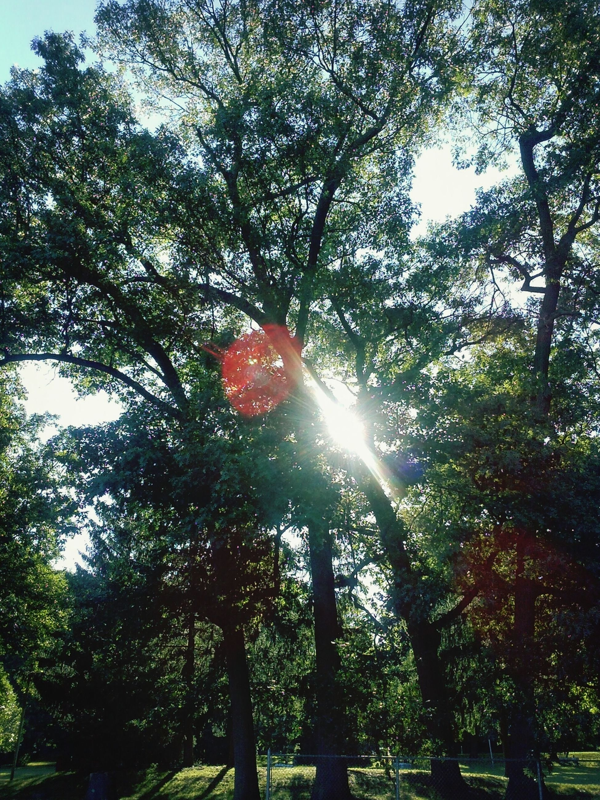 tree, sun, low angle view, growth, sunbeam, sunlight, lens flare, branch, nature, tranquility, beauty in nature, green color, forest, sky, day, outdoors, sunny, back lit, no people, scenics