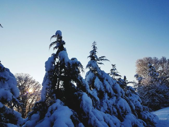 Sunrise Snow Tops Snow Winter Cold Temperature Mountain Outdoors Day Low Angle View Nature Tree Snowcapped Mountain No People Vacations Landscape Sky Beauty In Nature Shades Of Winter